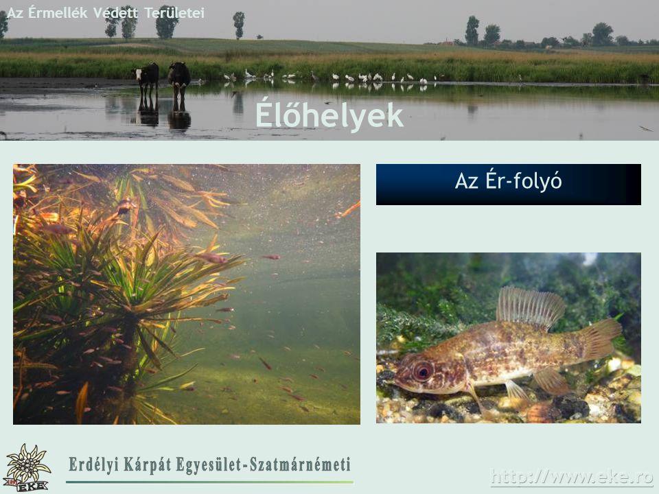 Élőhelyek Az Ér-folyó