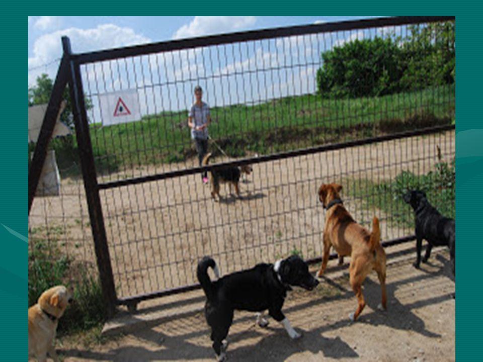 Kutyamenhely, ahol a 16 éven felüliek sétáltathatnak kutyákat