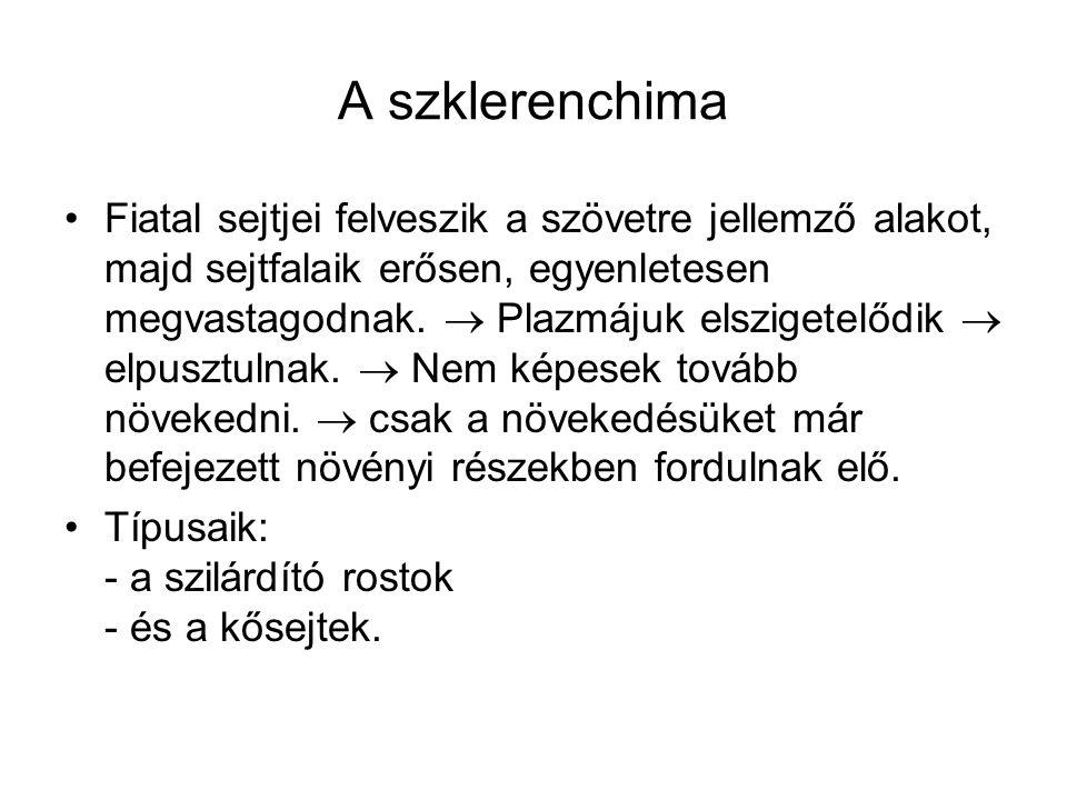 A szklerenchima