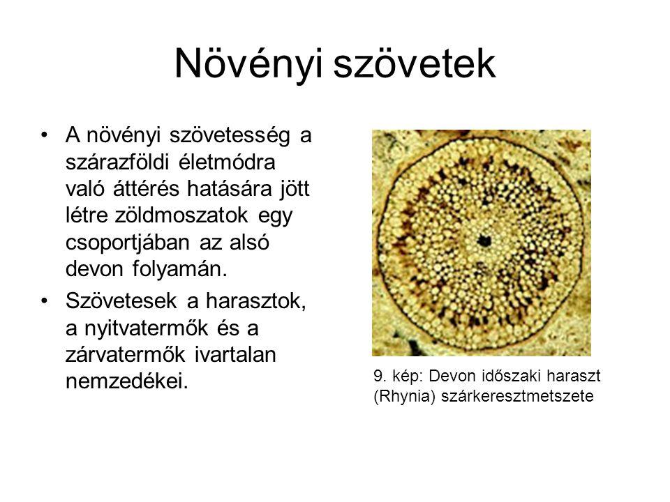 Növényi szövetek A növényi szövetesség a szárazföldi életmódra való áttérés hatására jött létre zöldmoszatok egy csoportjában az alsó devon folyamán.