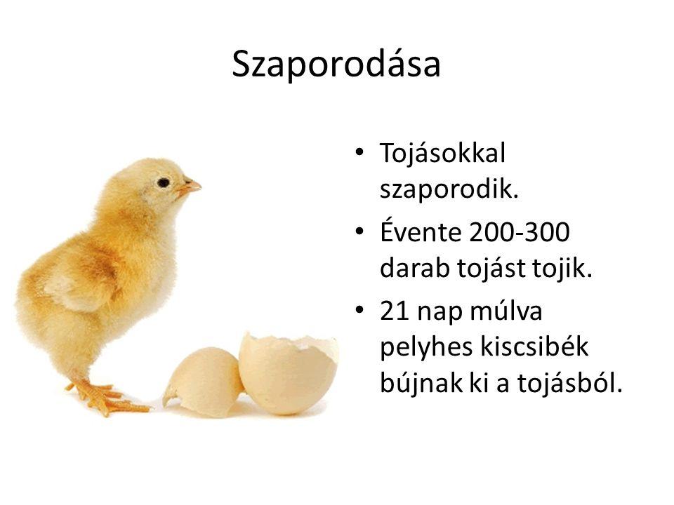 Szaporodása Tojásokkal szaporodik. Évente 200-300 darab tojást tojik.