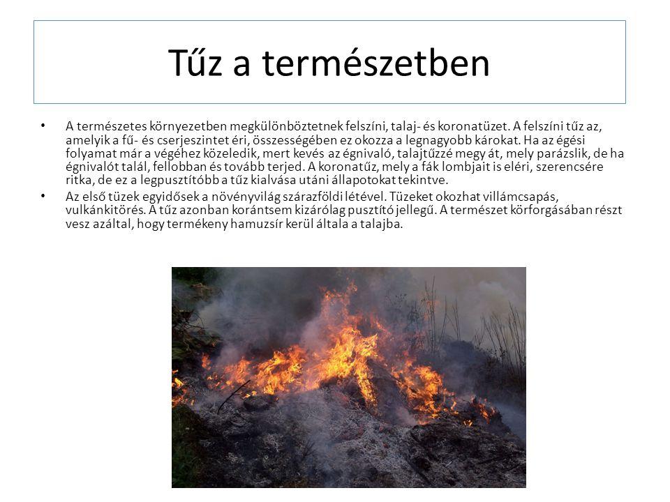Tűz a természetben
