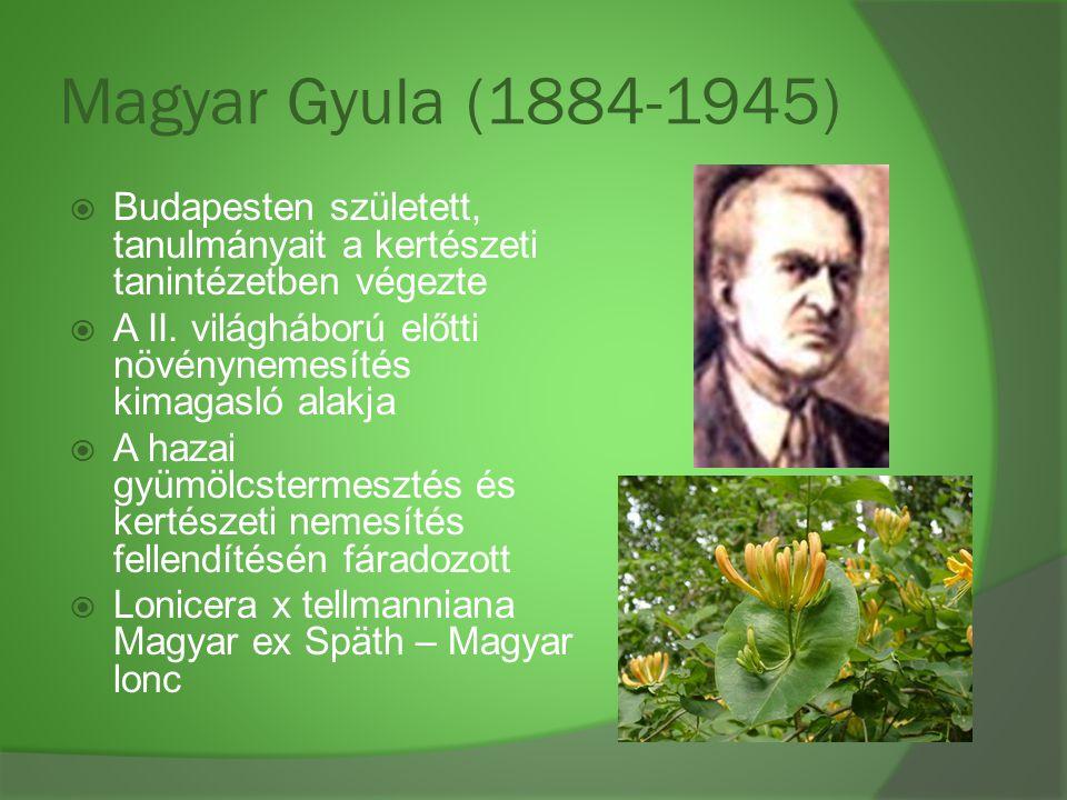 Magyar Gyula (1884-1945) Budapesten született, tanulmányait a kertészeti tanintézetben végezte.