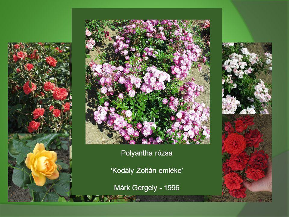 'Kodály Zoltán emléke'