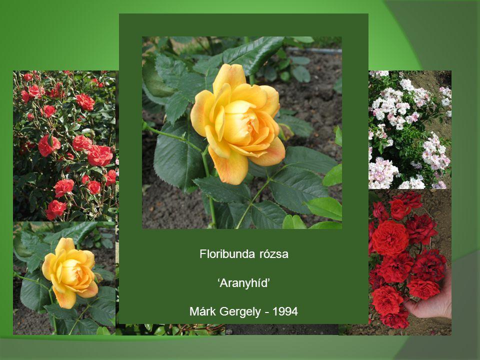Floribunda rózsa 'Aranyhíd' Márk Gergely - 1994