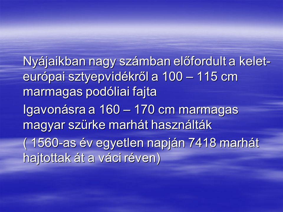 Nyájaikban nagy számban előfordult a kelet-európai sztyepvidékről a 100 – 115 cm marmagas podóliai fajta