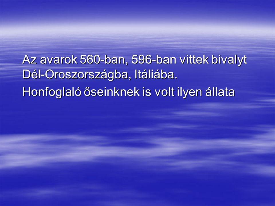 Az avarok 560-ban, 596-ban vittek bivalyt Dél-Oroszországba, Itáliába.