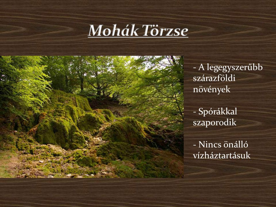 Mohák Törzse - A legegyszerűbb szárazföldi növények - Spórákkal szaporodik - Nincs önálló vízháztartásuk.