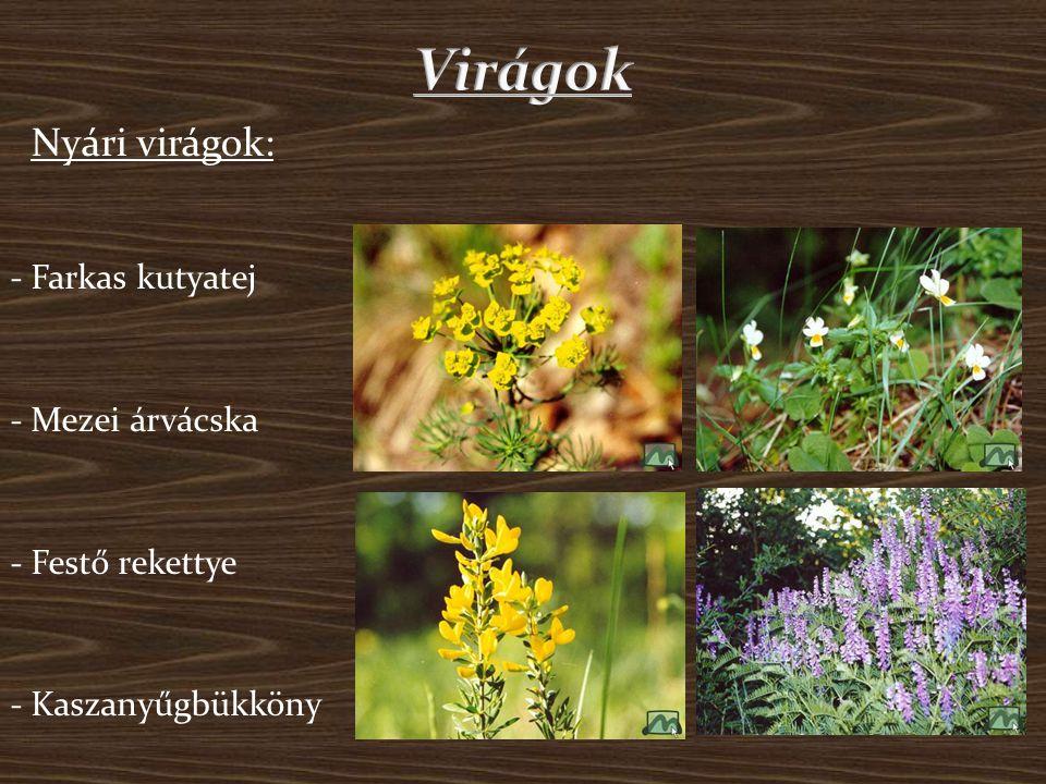 Virágok Nyári virágok: - Farkas kutyatej - Mezei árvácska