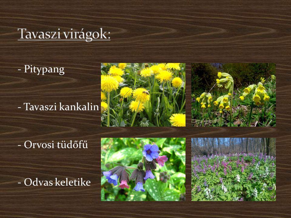 Tavaszi virágok: - Pitypang - Tavaszi kankalin - Orvosi tüdőfű - Odvas keletike