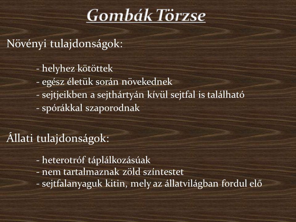 Gombák Törzse Növényi tulajdonságok: Állati tulajdonságok: