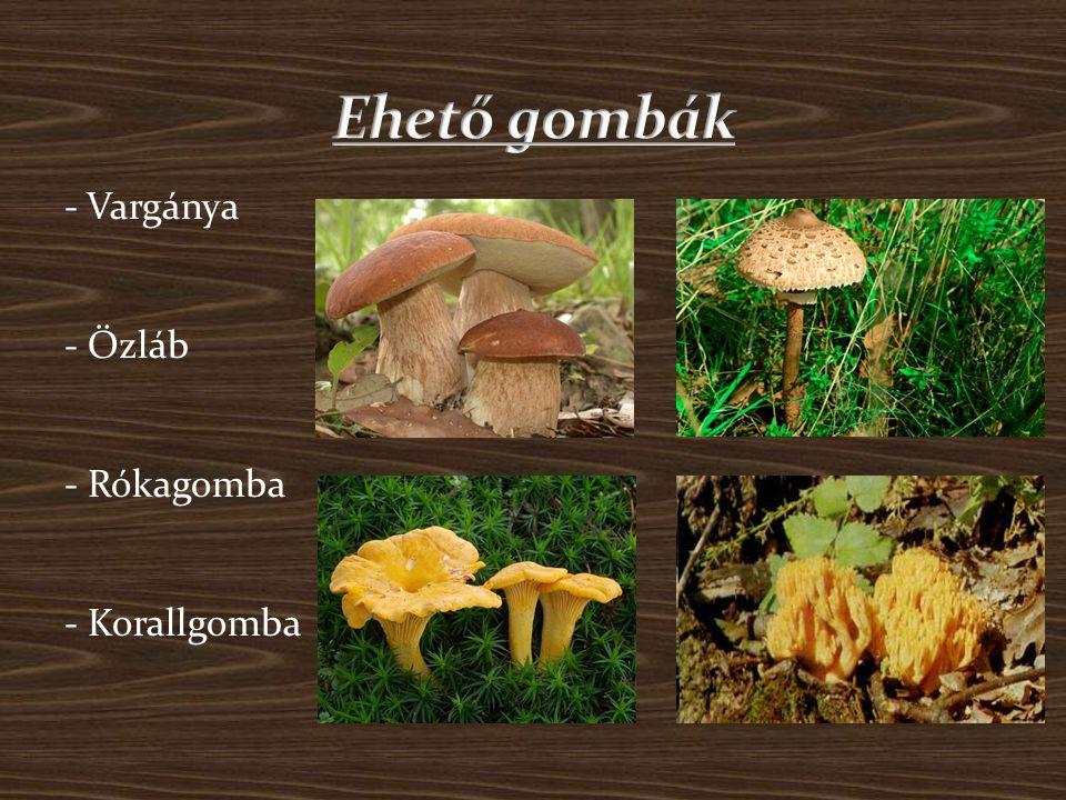 Ehető gombák - Vargánya - Őzláb - Rókagomba - Korallgomba