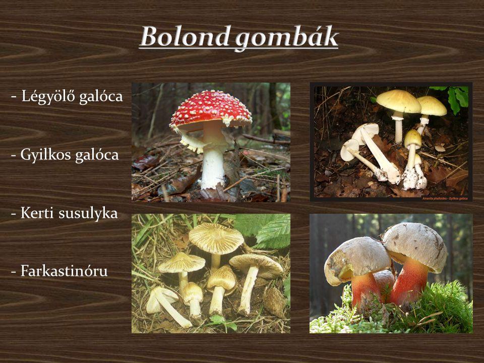 Bolond gombák - Légyölő galóca - Gyilkos galóca - Kerti susulyka - Farkastinóru