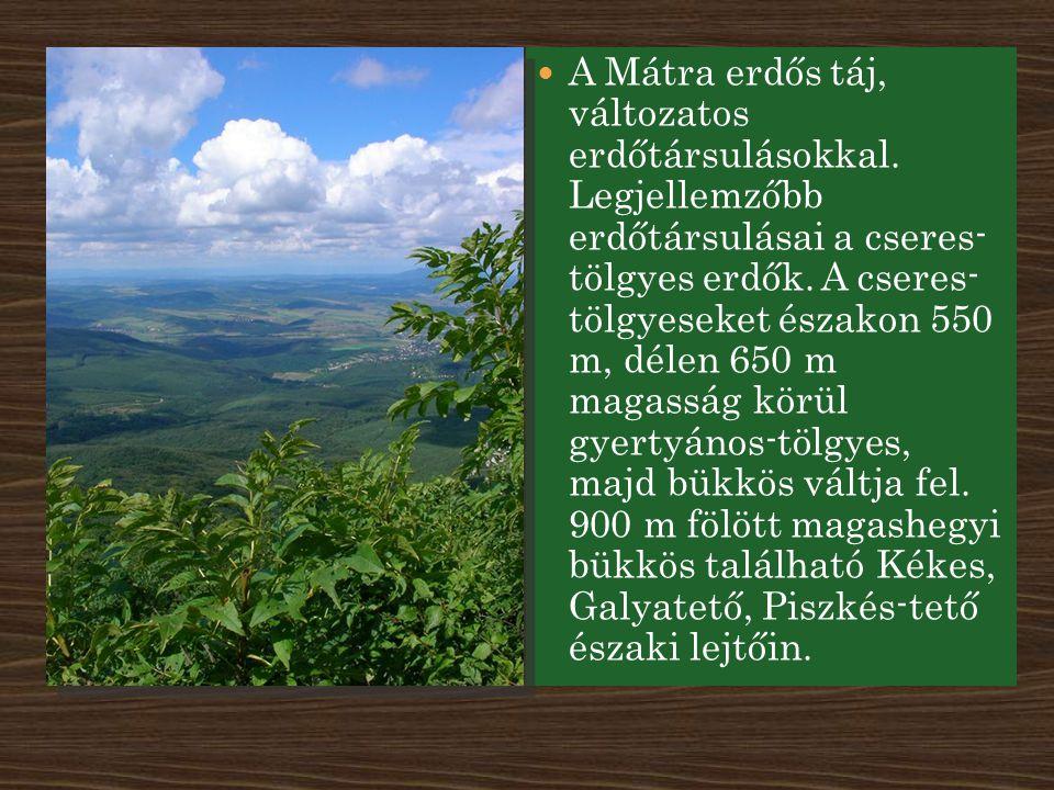 A Mátra erdős táj, változatos erdőtársulásokkal