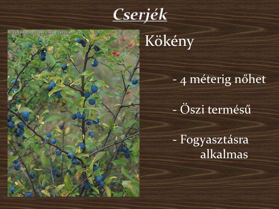 Cserjék Kökény - 4 méterig nőhet - Őszi termésű