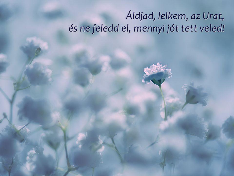 Áldjad, lelkem, az Urat, és ne feledd el, mennyi jót tett veled!