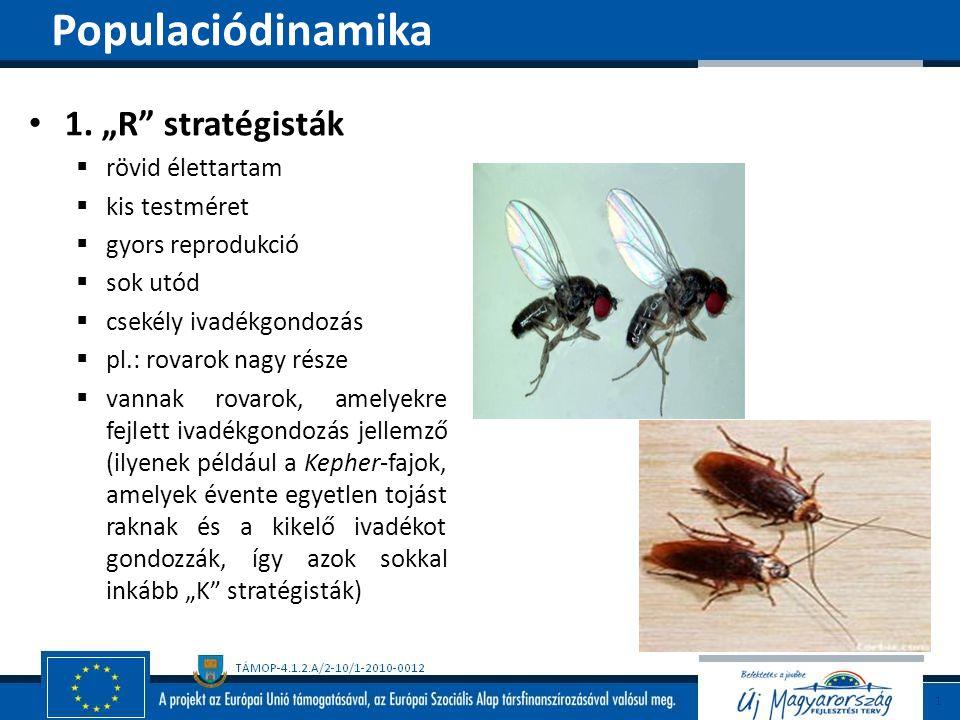 """Populaciódinamika 1. """"R stratégisták rövid élettartam kis testméret"""