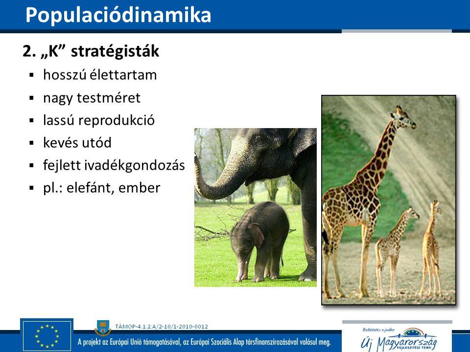 """Populaciódinamika 2. """"K stratégisták hosszú élettartam nagy testméret"""