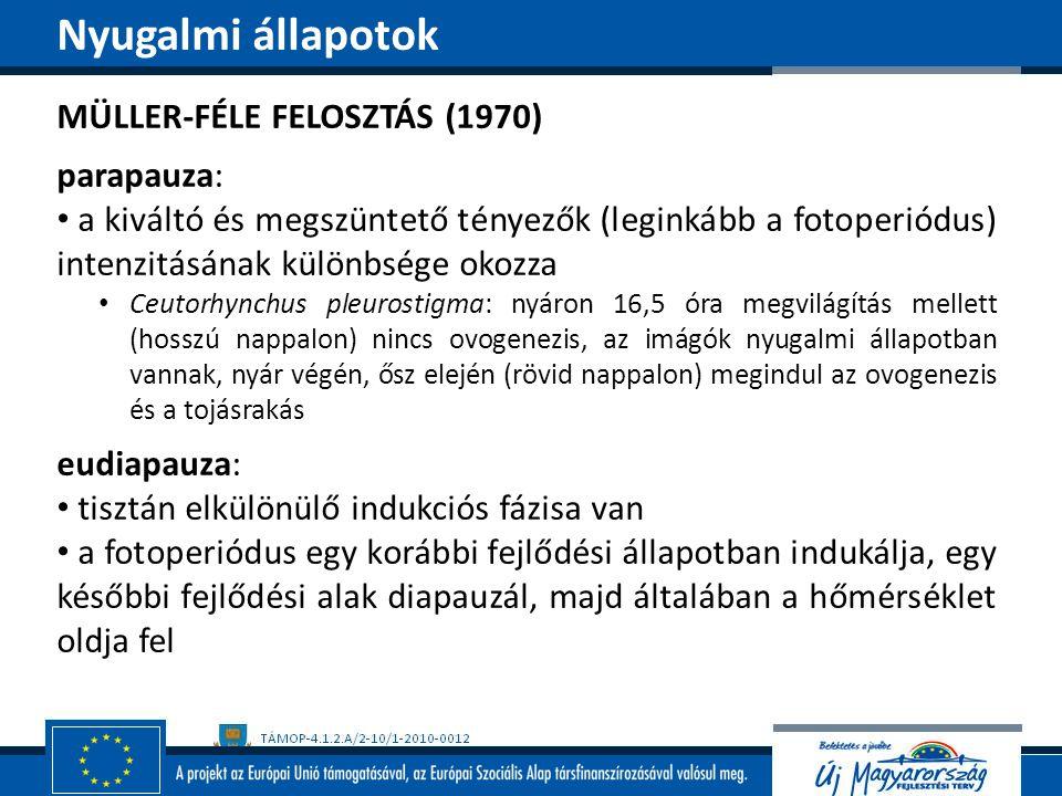 Nyugalmi állapotok MÜLLER-FÉLE FELOSZTÁS (1970) parapauza: