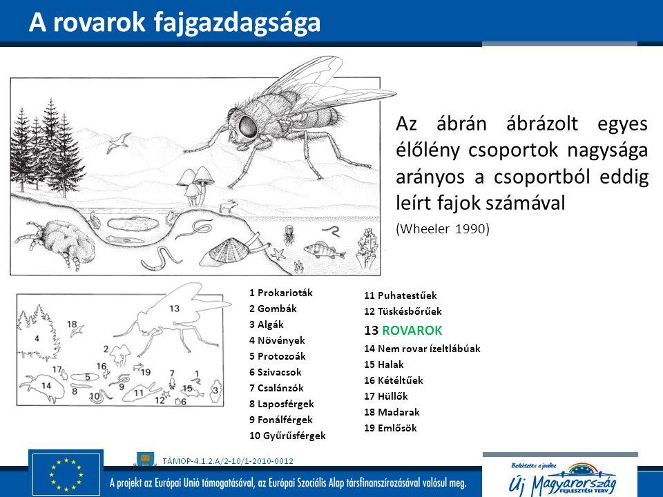 A rovarok fajgazdagsága