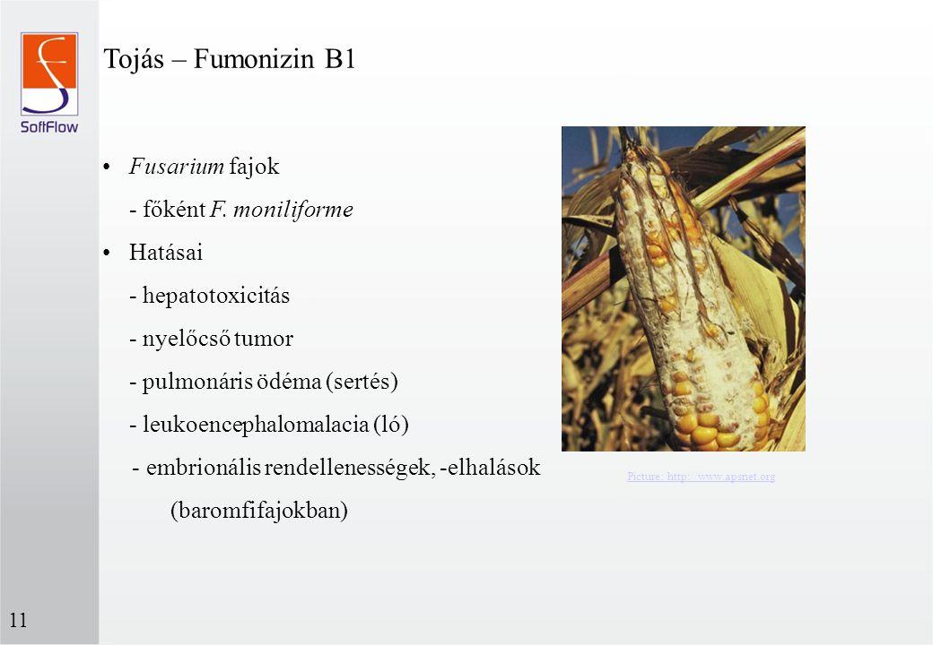 Tojás – Fumonizin B1 Fusarium fajok - főként F. moniliforme
