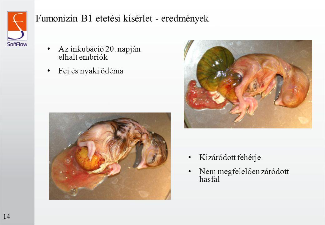 Fumonizin B1 etetési kísérlet - eredmények