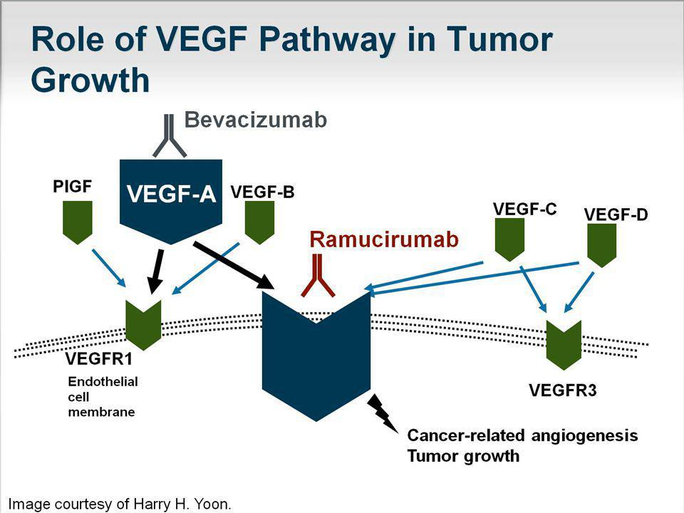 Role of VEGF Pathway in Tumor Growth