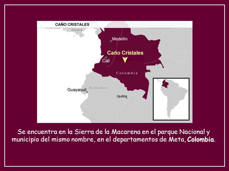 Se encuentra en la Sierra de la Macarena en el parque Nacional y municipio del mismo nombre, en el departamentos de Meta, Colombia.