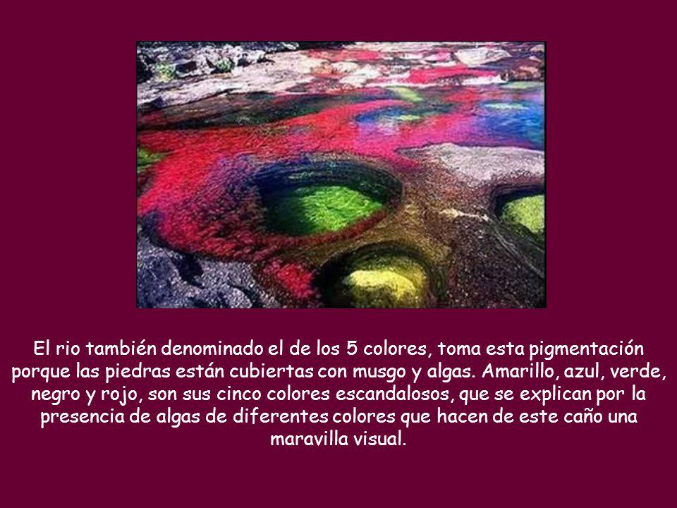 El rio también denominado el de los 5 colores, toma esta pigmentación porque las piedras están cubiertas con musgo y algas.