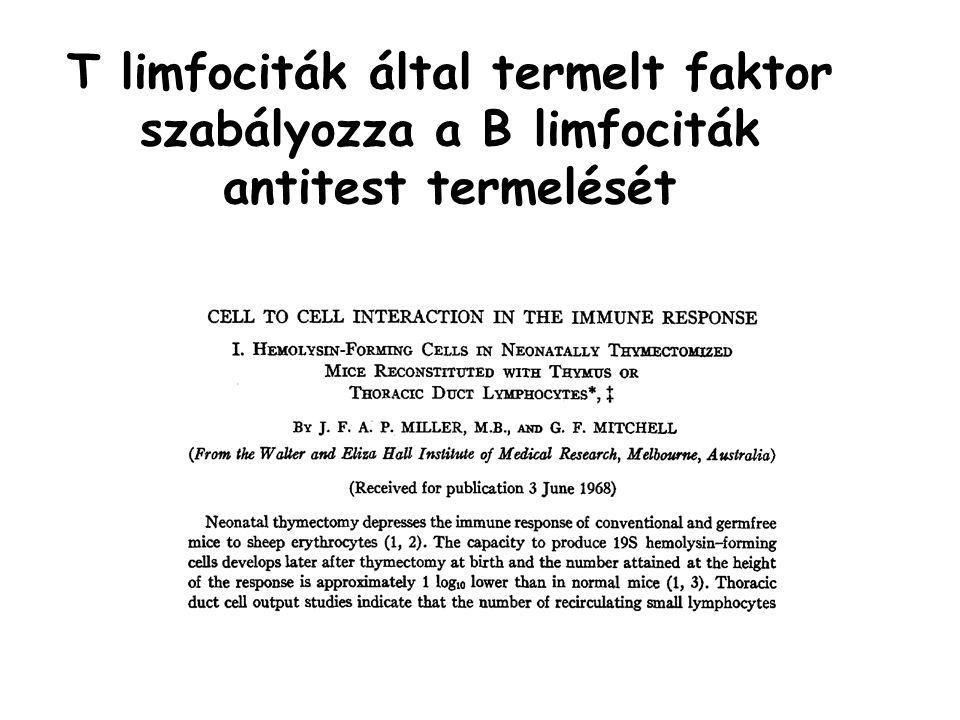 T limfociták által termelt faktor szabályozza a B limfociták