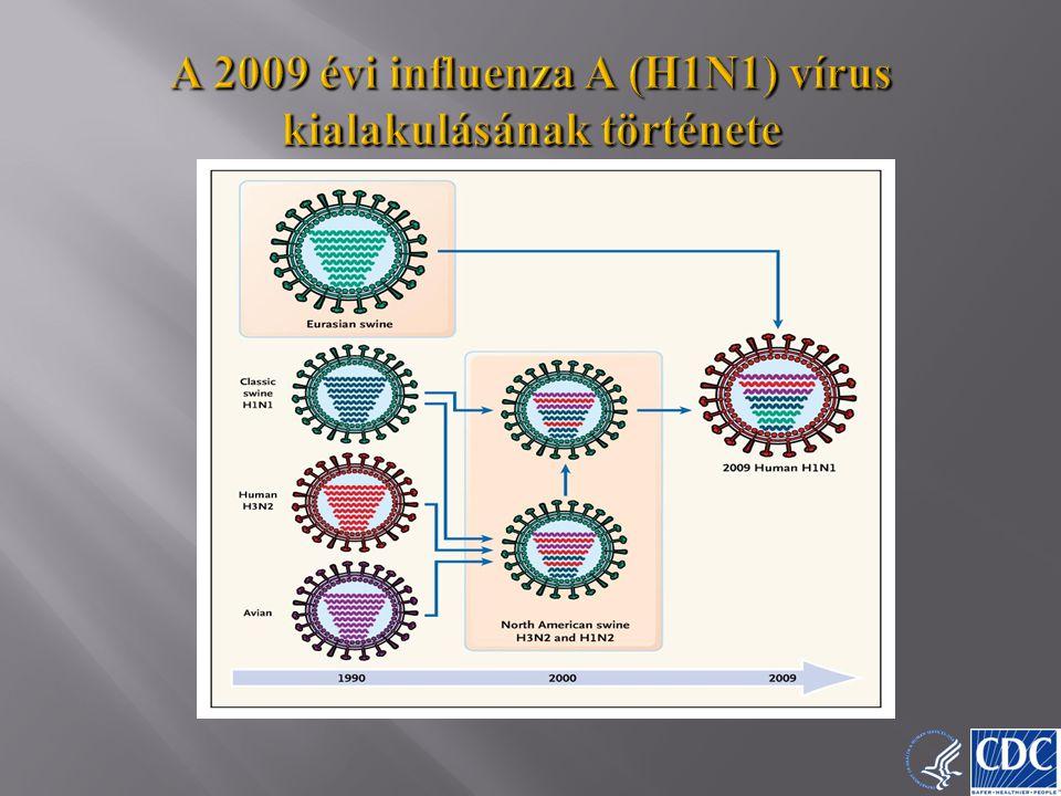 A 2009 évi influenza A (H1N1) vírus kialakulásának története