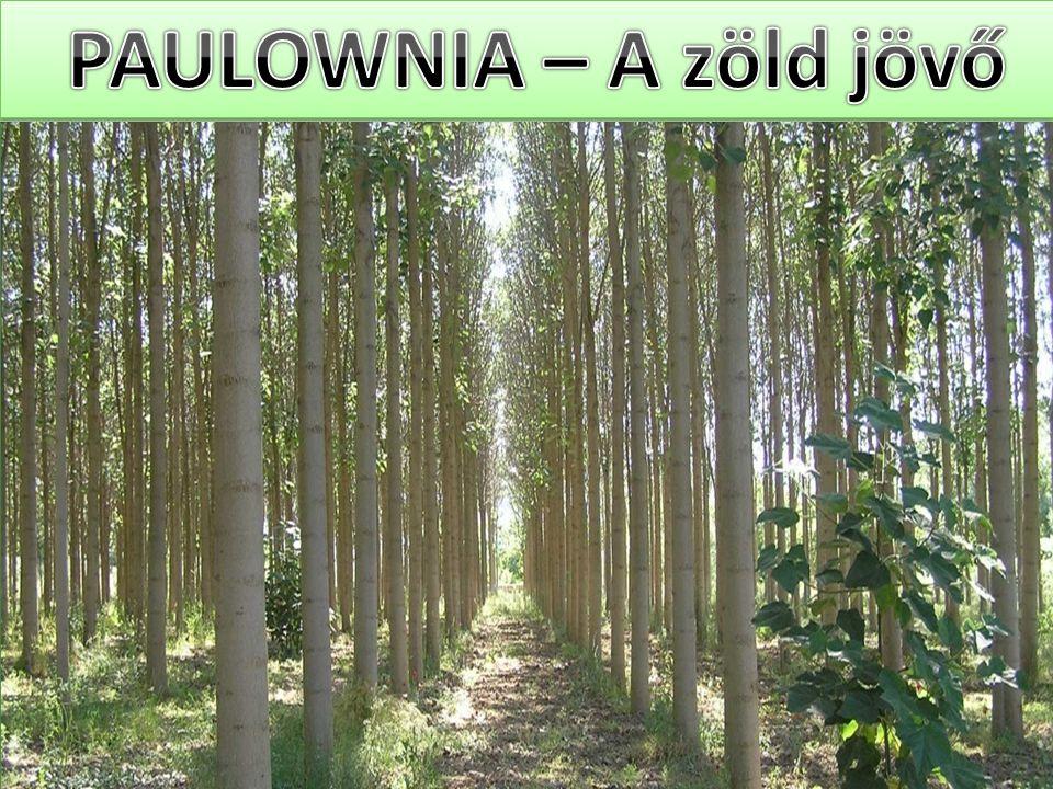 PAULOWNIA – A zöld jövő