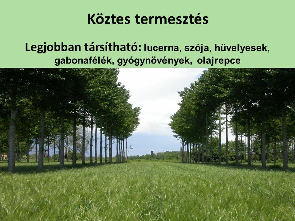 Köztes termesztés Legjobban társítható: lucerna, szója, hüvelyesek, gabonafélék, gyógynövények, olajrepce.