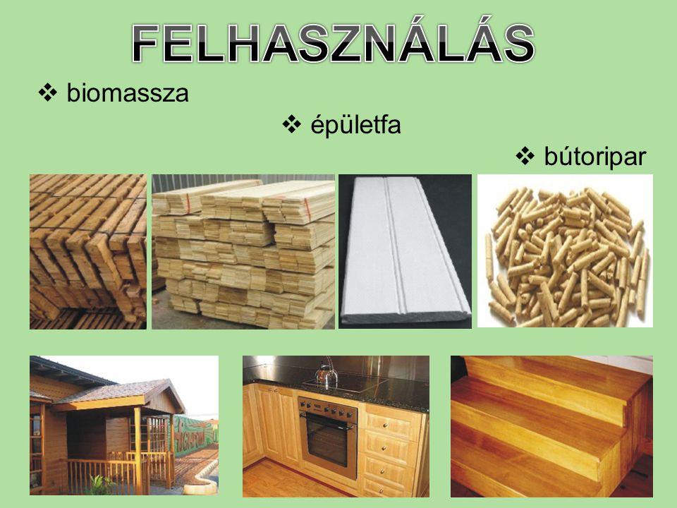 FELHASZNÁLÁS biomassza épületfa bútoripar