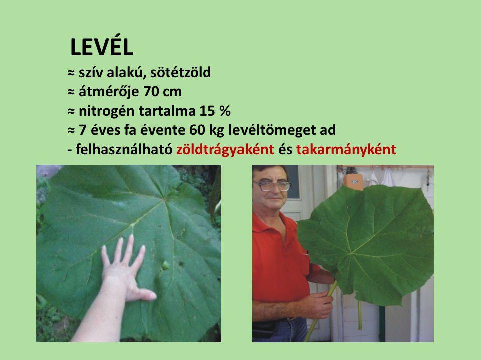 LEVÉL ≈ szív alakú, sötétzöld ≈ átmérője 70 cm ≈ nitrogén tartalma 15 % ≈ 7 éves fa évente 60 kg levéltömeget ad - felhasználható zöldtrágyaként és takarmányként