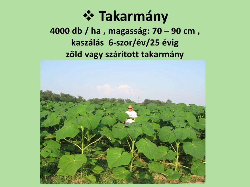 Takarmány 4000 db / ha , magasság: 70 – 90 cm , kaszálás 6-szor/év/25 évig zöld vagy szárított takarmány