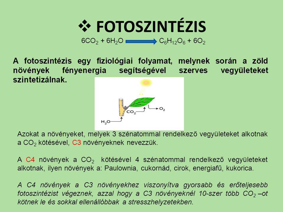 FOTOSZINTÉZIS 6CO2 + 6H2O C6H12O6 + 6O2.