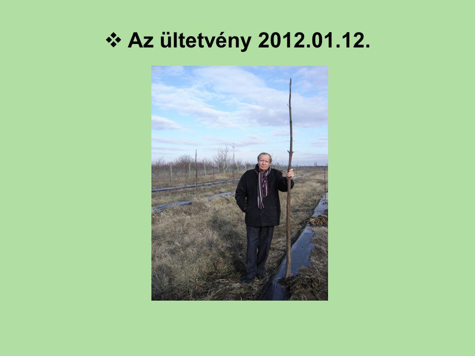 Az ültetvény 2012.01.12.