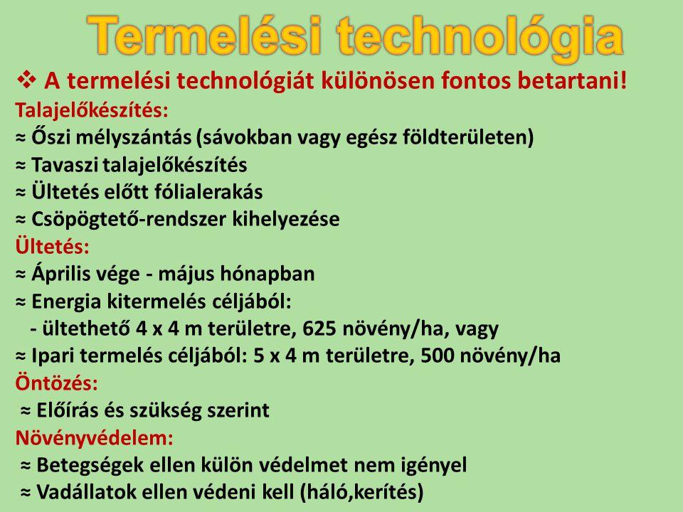 Termelési technológia