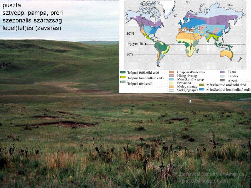 puszta sztyepp, pampa, préri szezonális szárazság legel(tet)és (zavarás)
