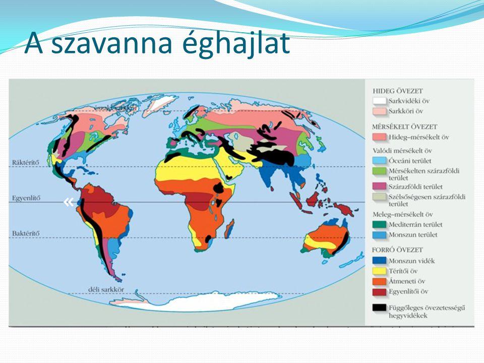 A szavanna éghajlat elhelyezkedése Amerika Afrika Ausztrália