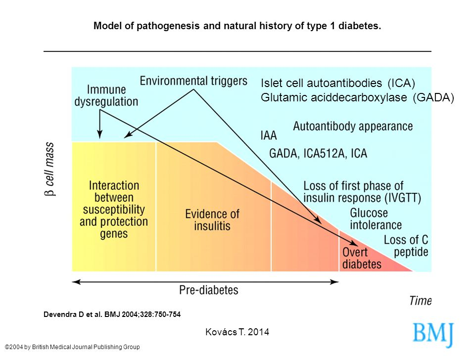 Model of pathogenesis and natural history of type 1 diabetes.