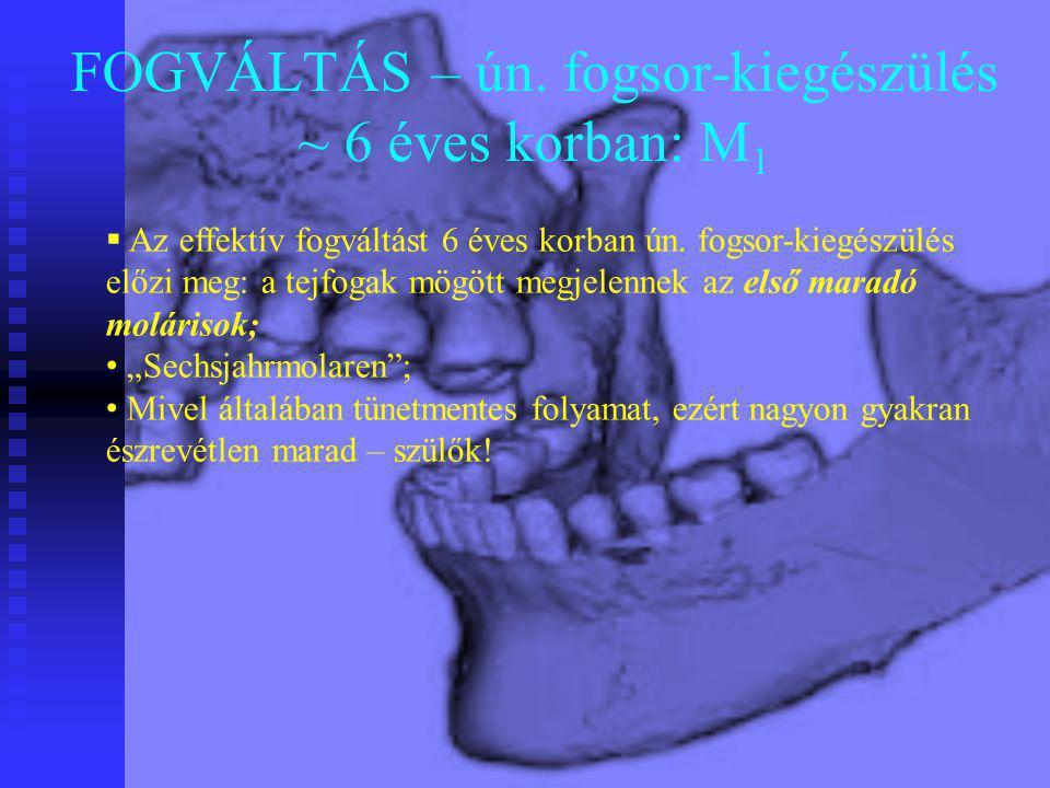 FOGVÁLTÁS – ún. fogsor-kiegészülés ~ 6 éves korban: M1