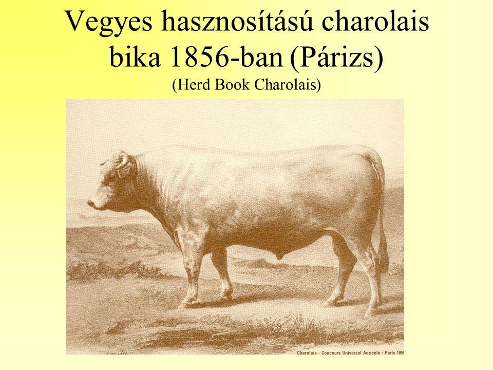 Vegyes hasznosítású charolais bika 1856-ban (Párizs) (Herd Book Charolais)