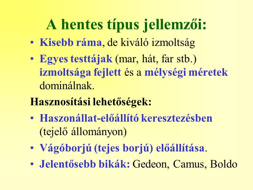 A hentes típus jellemzői: