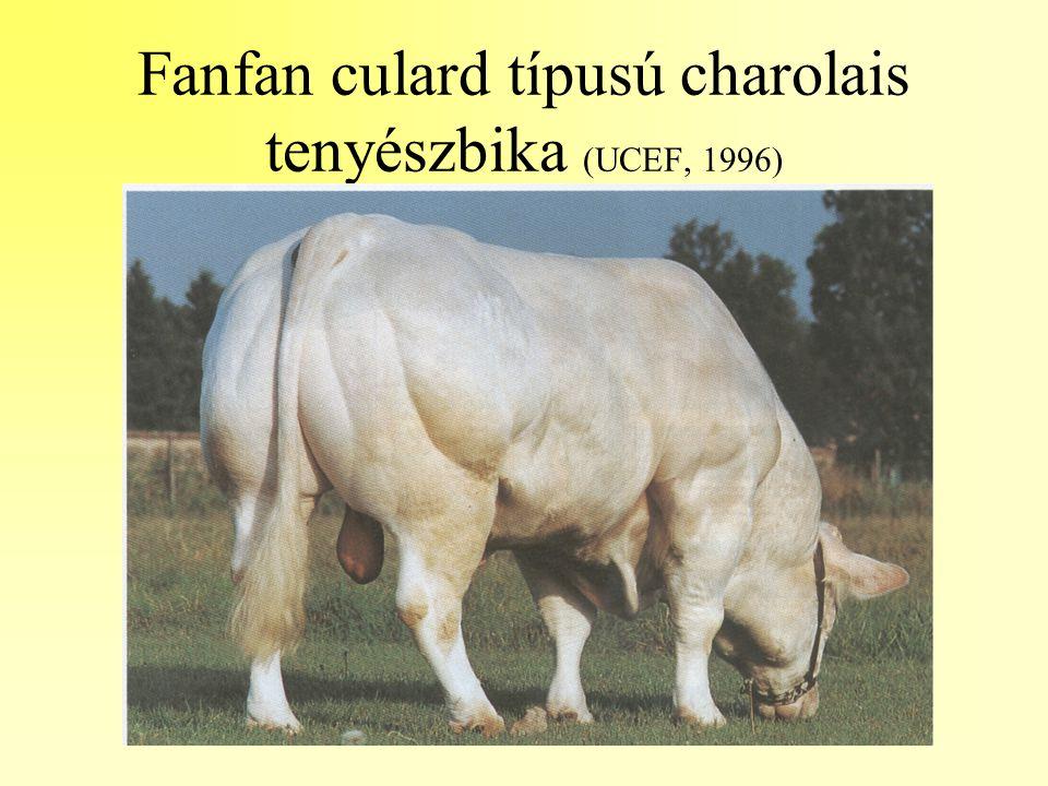 Fanfan culard típusú charolais tenyészbika (UCEF, 1996)