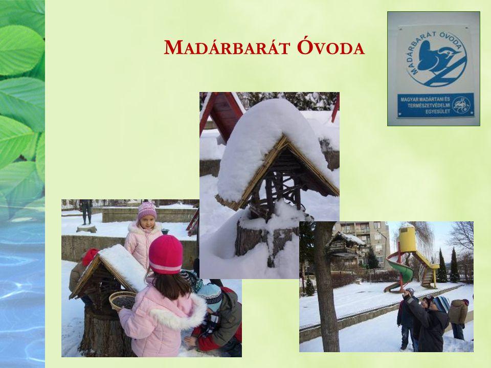 Madárbarát Óvoda