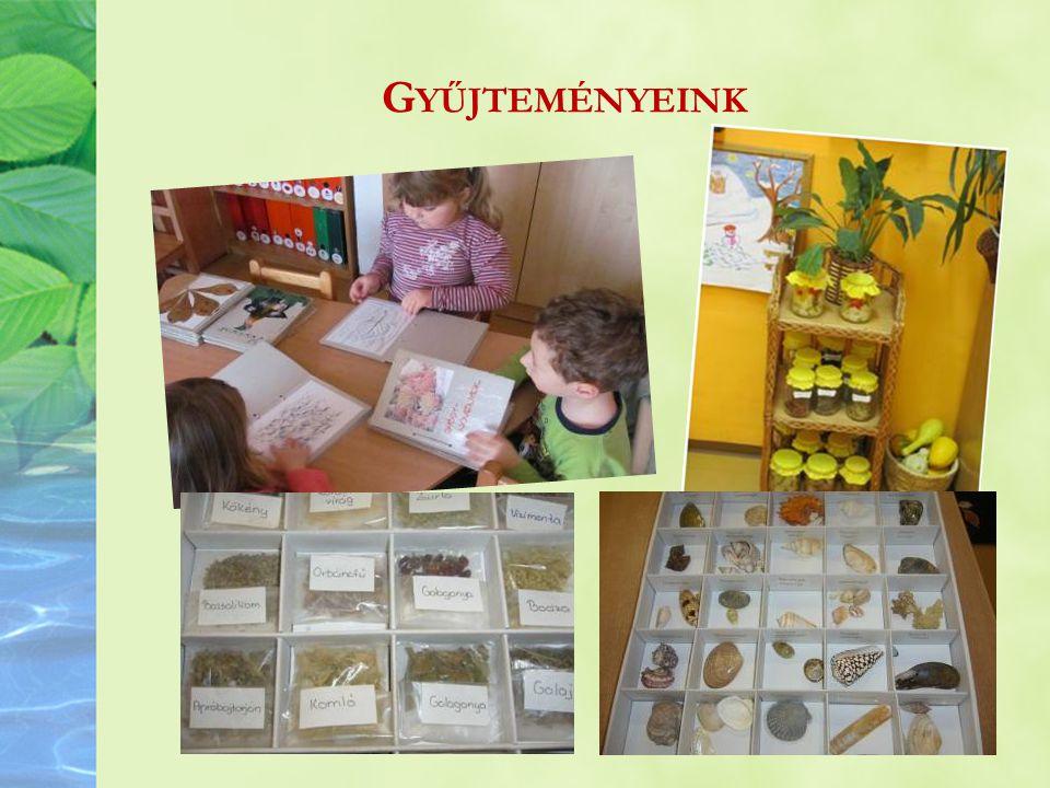Gyűjteményeink