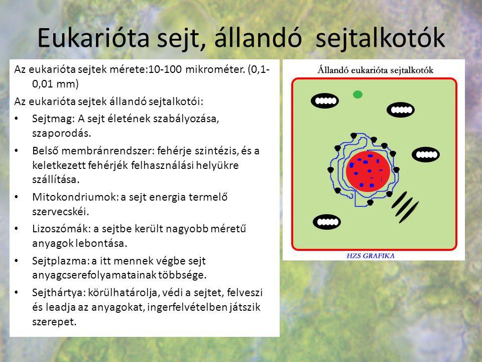 Eukarióta sejt, állandó sejtalkotók