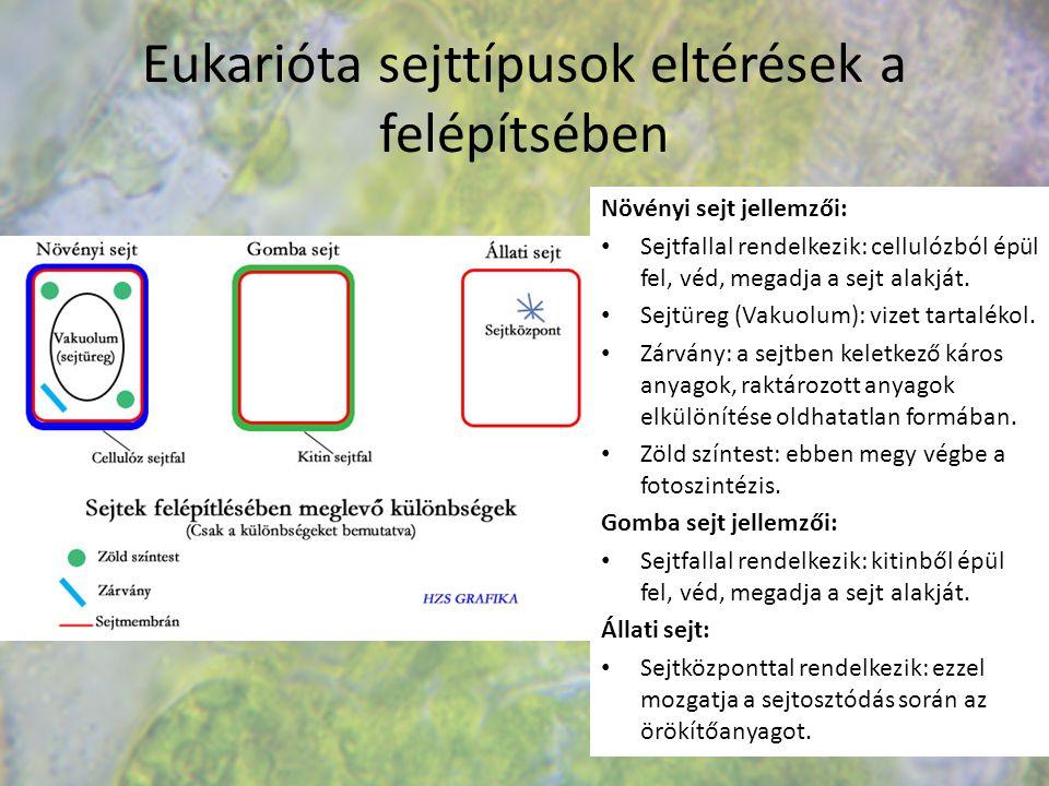 Eukarióta sejttípusok eltérések a felépítsében